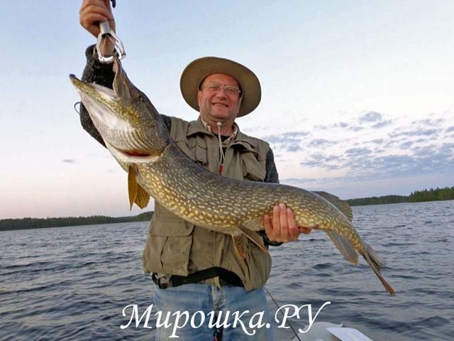 охота рыбалка на авито в питере